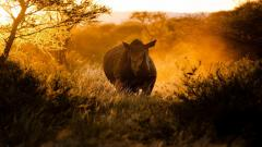 Rhinoceros Animal Wallpaper HD 49315