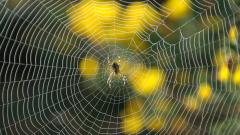 Spider Web Desktop Wallpaper 49621