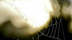 Spider Web Photography Wallpaper 49623