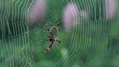 Spider Web Wallpaper 49622