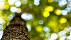 Tree Bark Close Up Wallpaper 49760