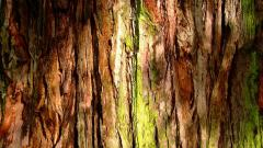 Tree Bark Texture Computer Wallpaper 49758