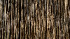 Tree Bark Texture Widescreen Wallpaper 49759