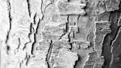 Tree Bark Wallpaper 49764