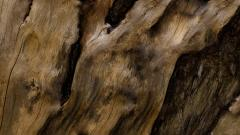 Tree Bark Wallpaper Background 49762