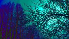 Trippy Trees Wallpaper 50037