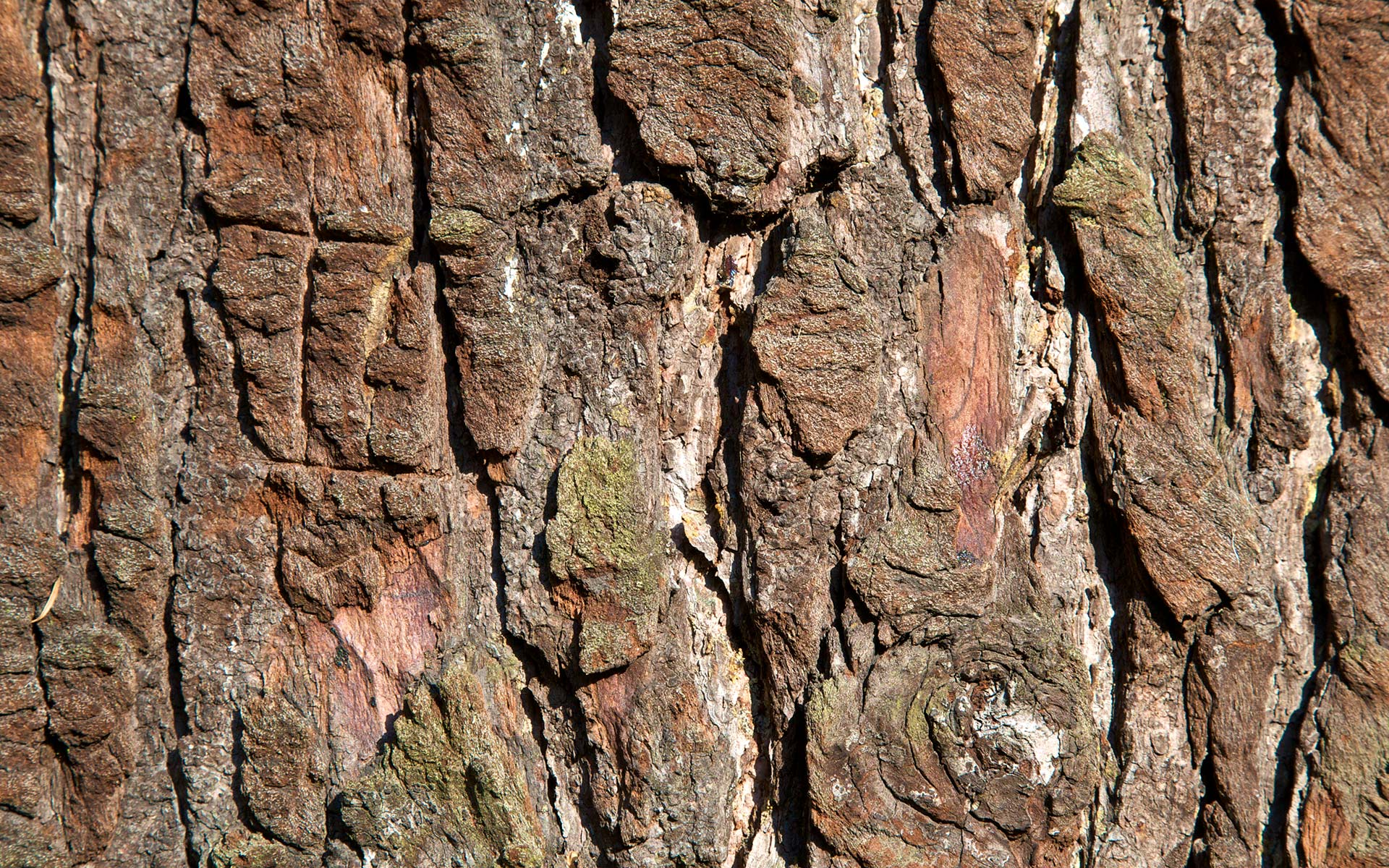 tree bark desktop wallpaper 49763