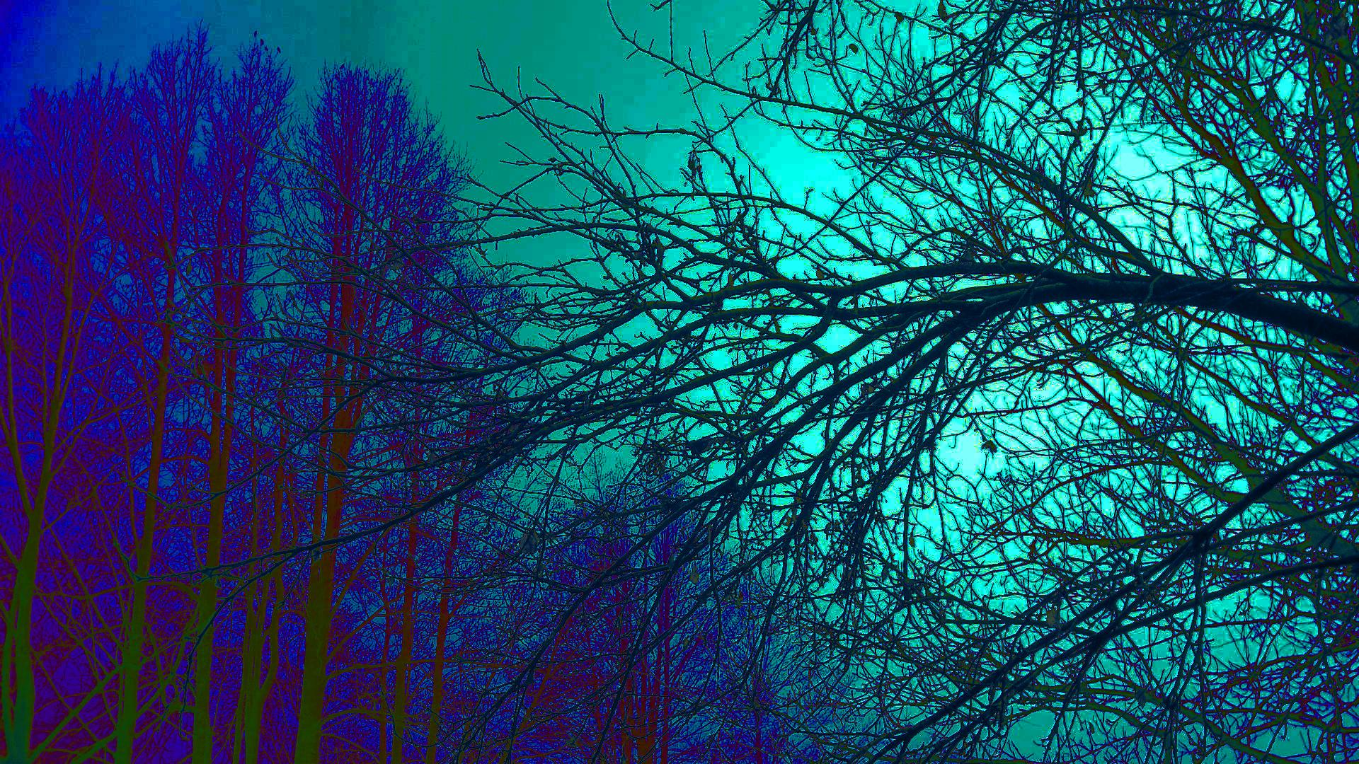Trippy Trees Wallpaper 50037 1920x1080 px HDWallSourcecom