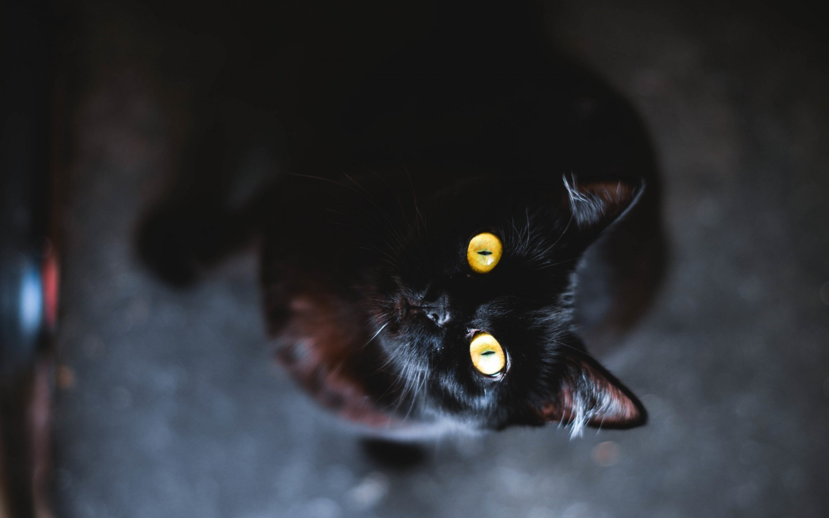 black cat computer hd wallpaper 58765