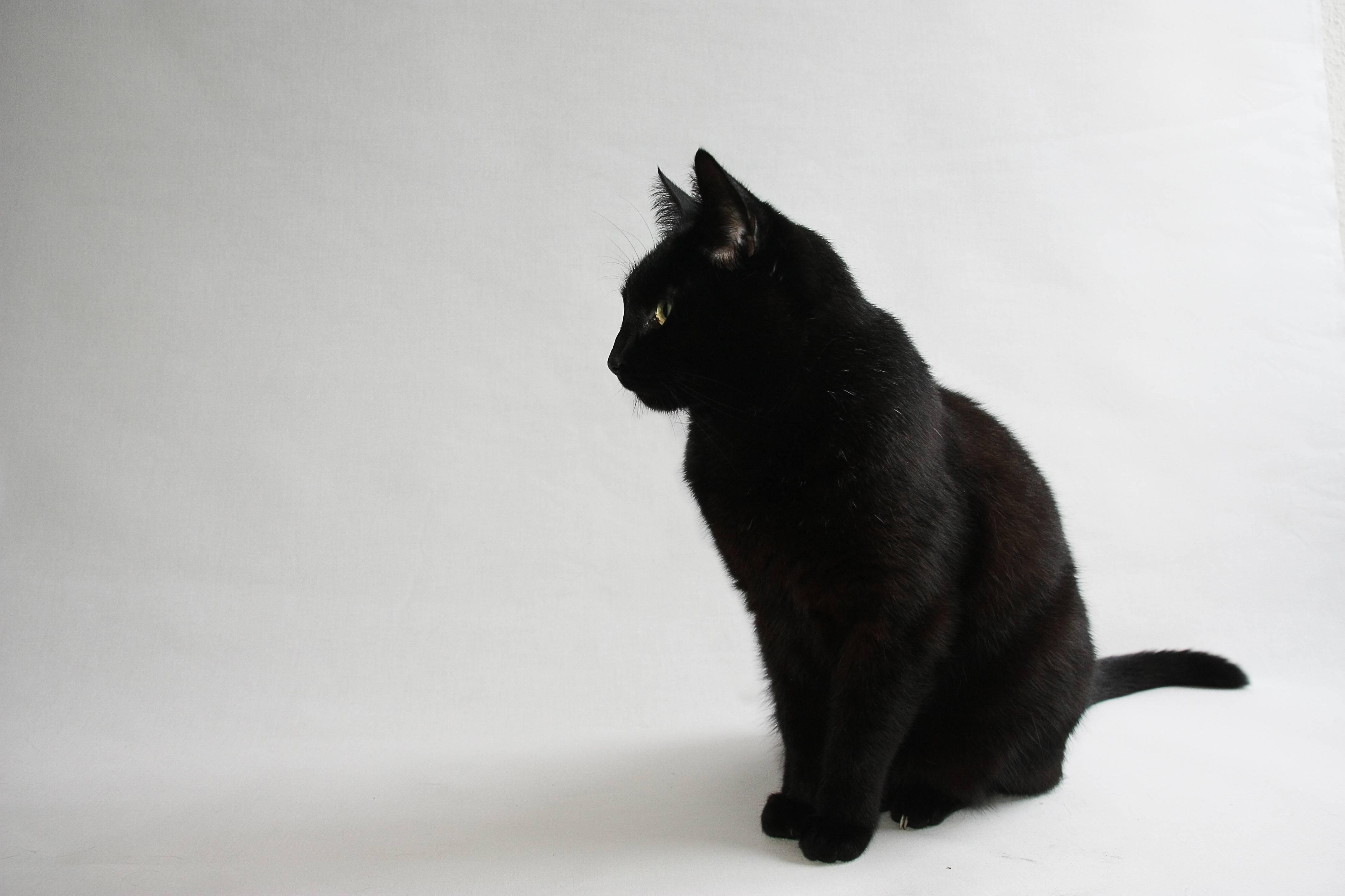 black cat widescreen wallpaper 58769
