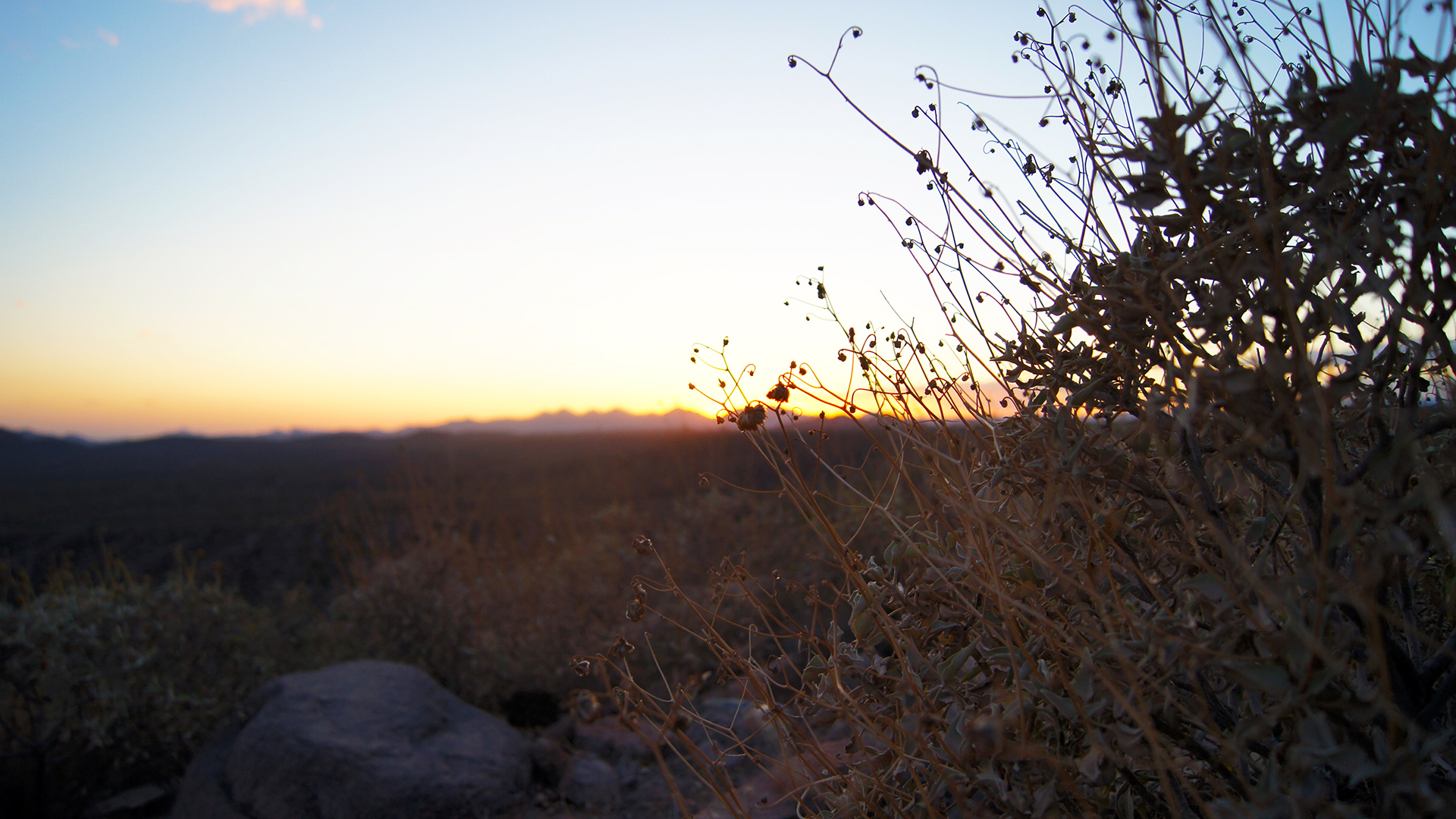 saguaro lake sunset bokeh 51684