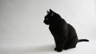 Black Cat Widescreen Wallpaper 58769