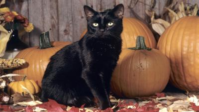 Halloween Black Cat Wide Wallpaper 58768