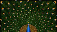 Peacock Computer Wallpaper 50069