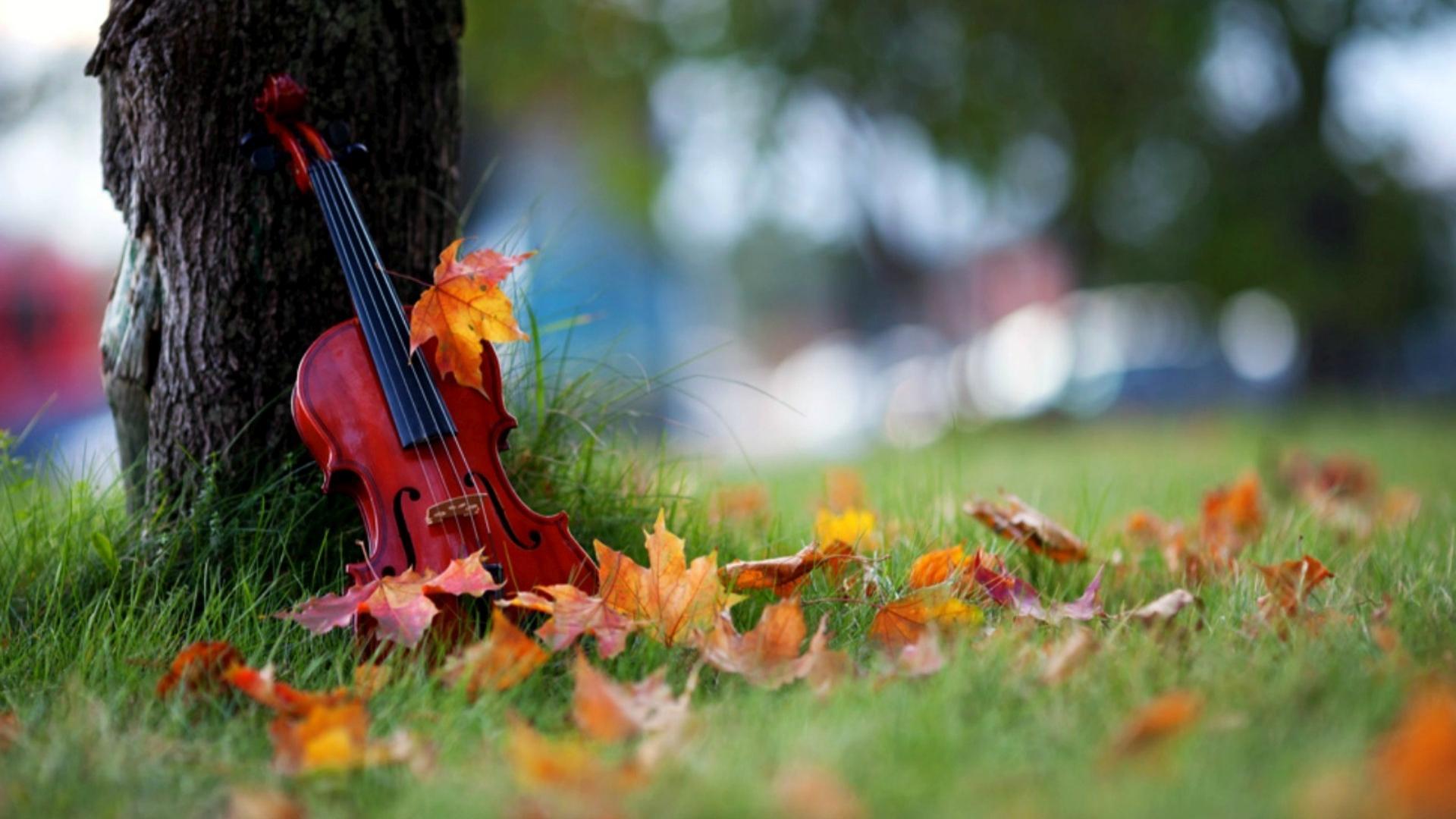 violin desktop wallpaper pictures 58798