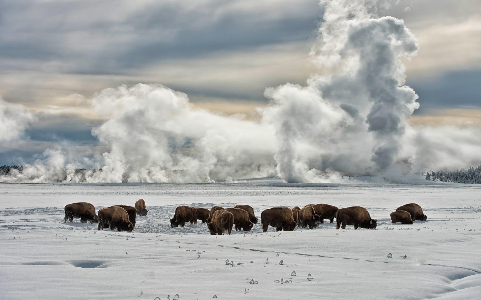 herd desktop wallpaper 53718