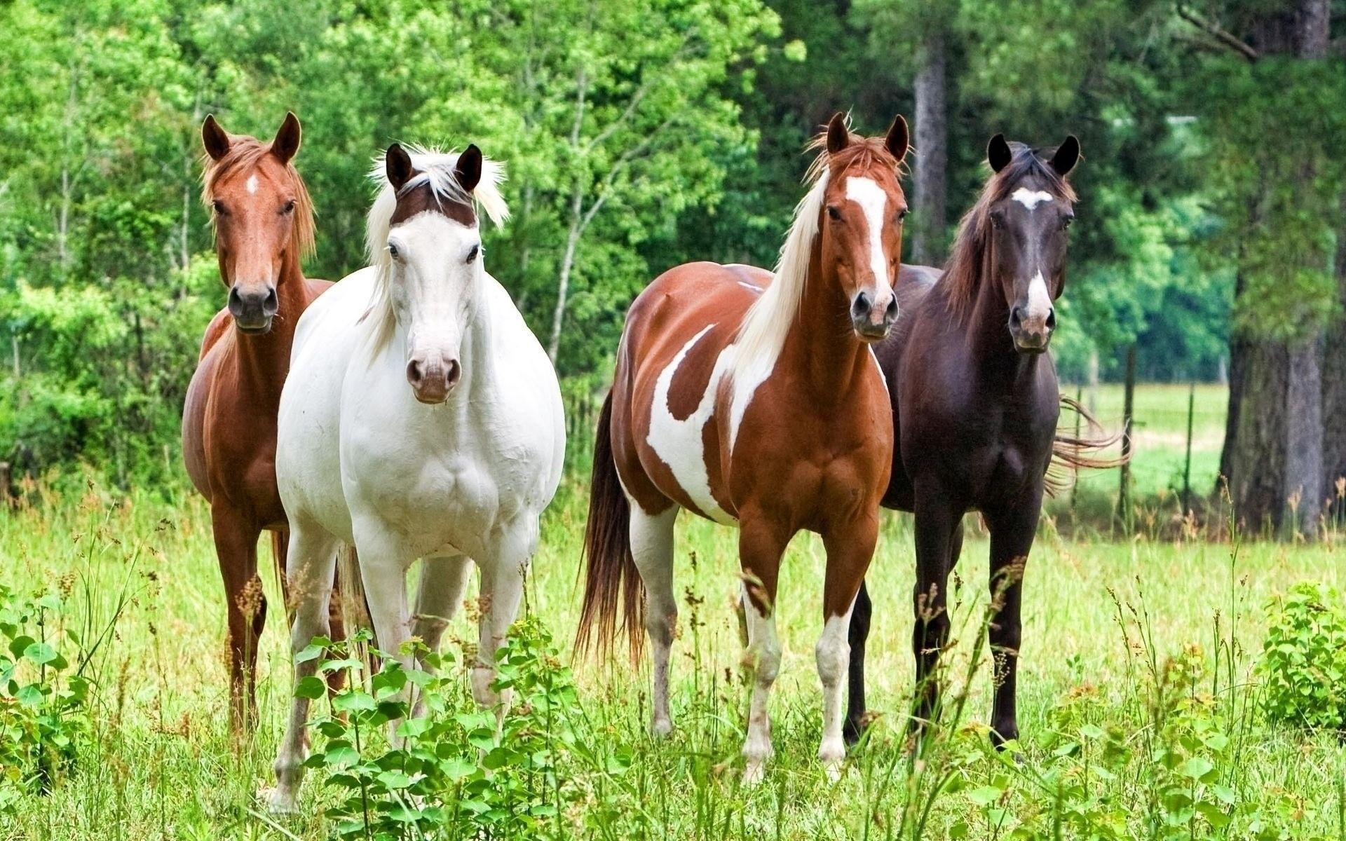 horse herd hd wallpaper 53716