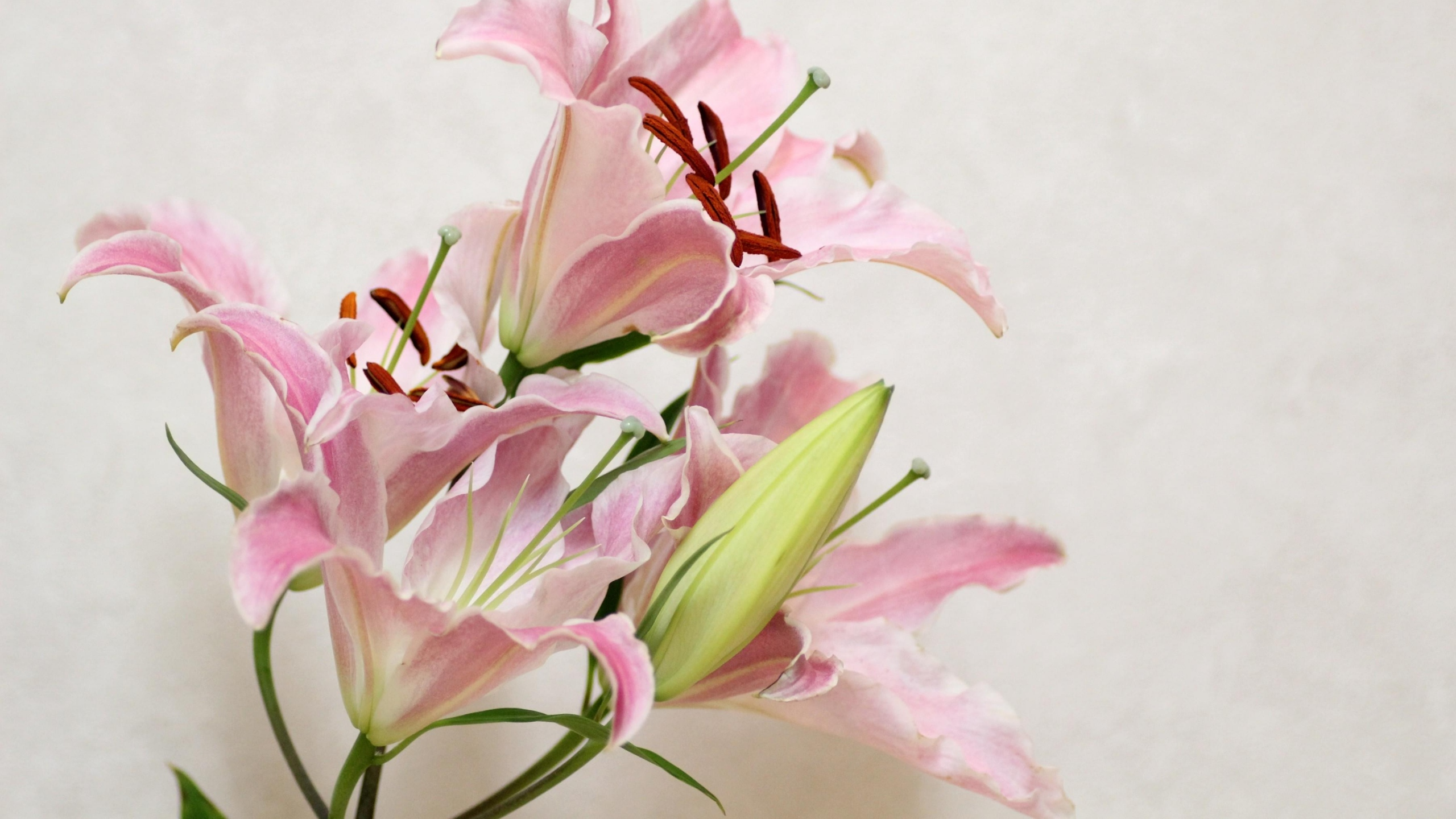 lily flowers wide wallpaper 50635