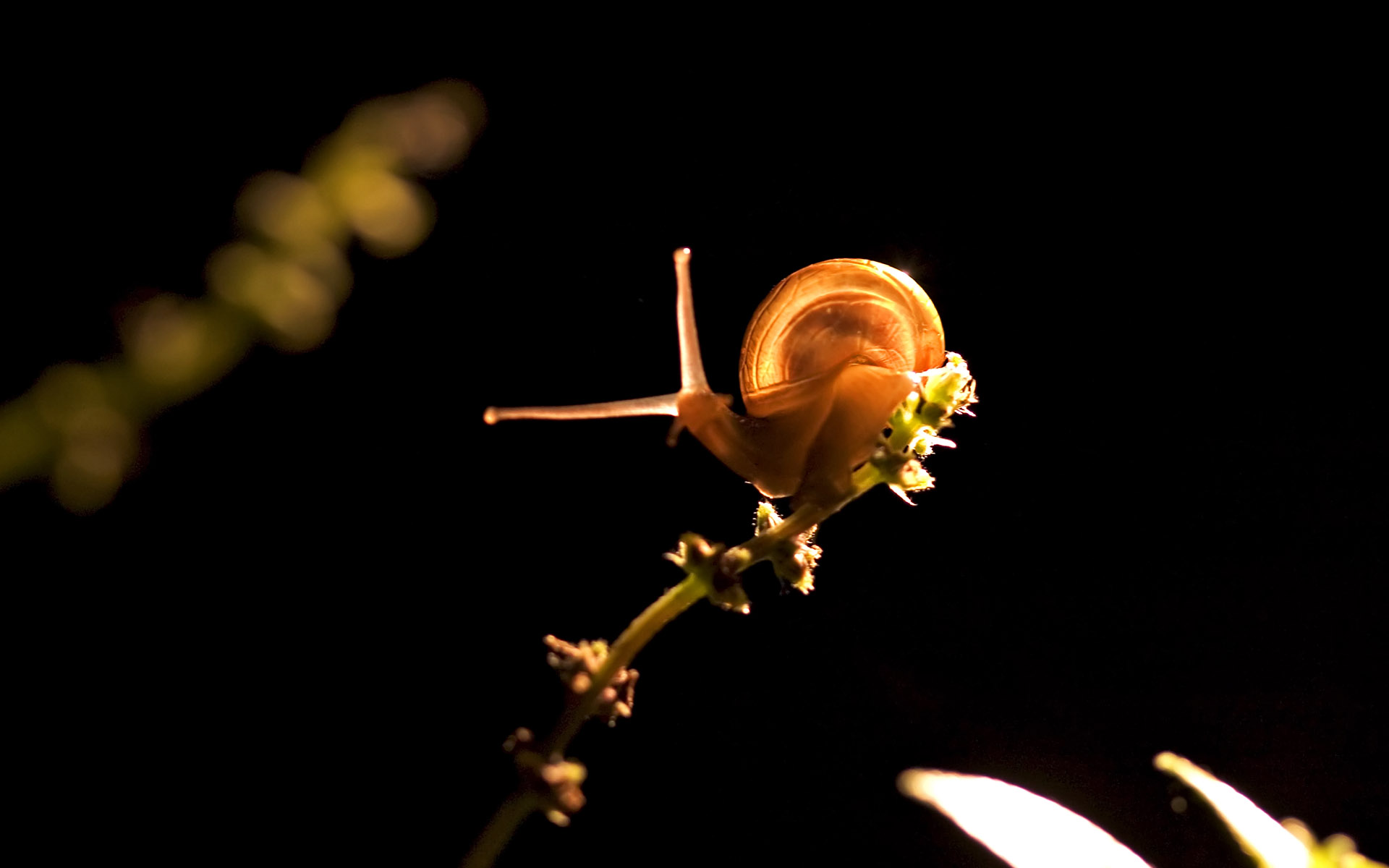 snail animal wallpaper 51236