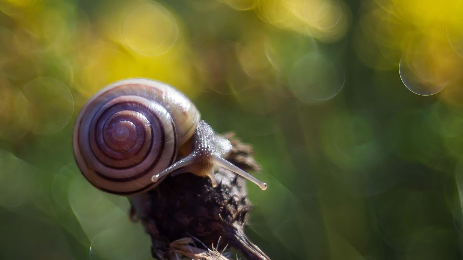 snail macro photography wallpaper 51242