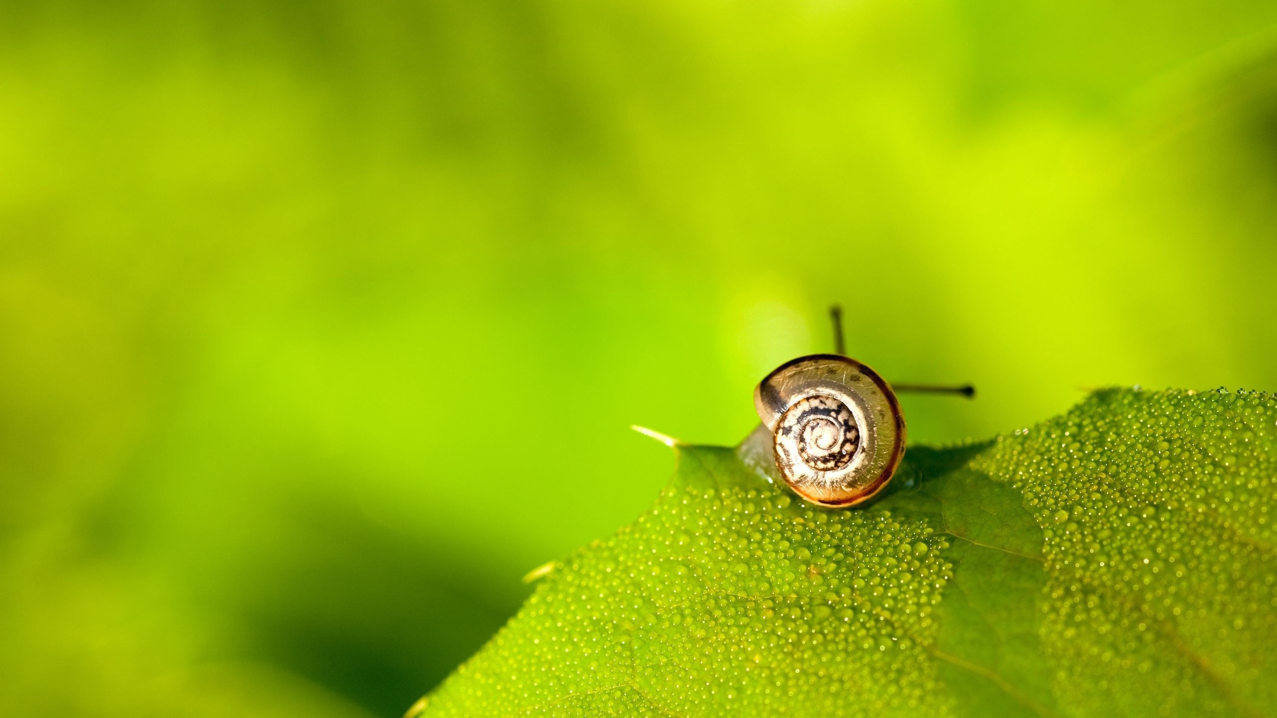 snail wide wallpaper 51239