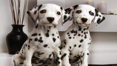 Dalmatian Dogs Computer Wallpaper 50343