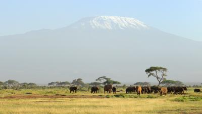 Elephant Herd Widescreen Wallpaper 53715