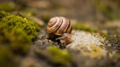 Snail Wide HD Wallpaper 51248