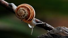 Snail Widescreen HD Wallpaper 51244