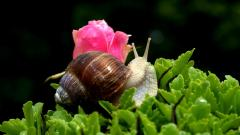 Snail Widescreen Wallpaper 51245