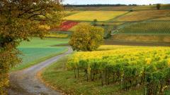 Vineyard Desktop Wallpaper 51270