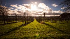 Vineyard HD Wallpaper 51266