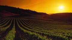 Vineyard Sunset Wallpaper 51267