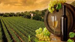 Vineyard Wallpaper Background 51268