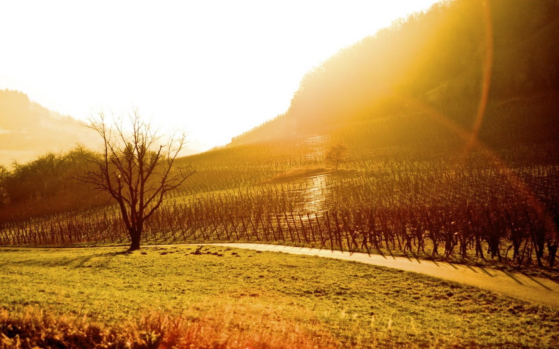 vineyard desktop wallpaper 51262