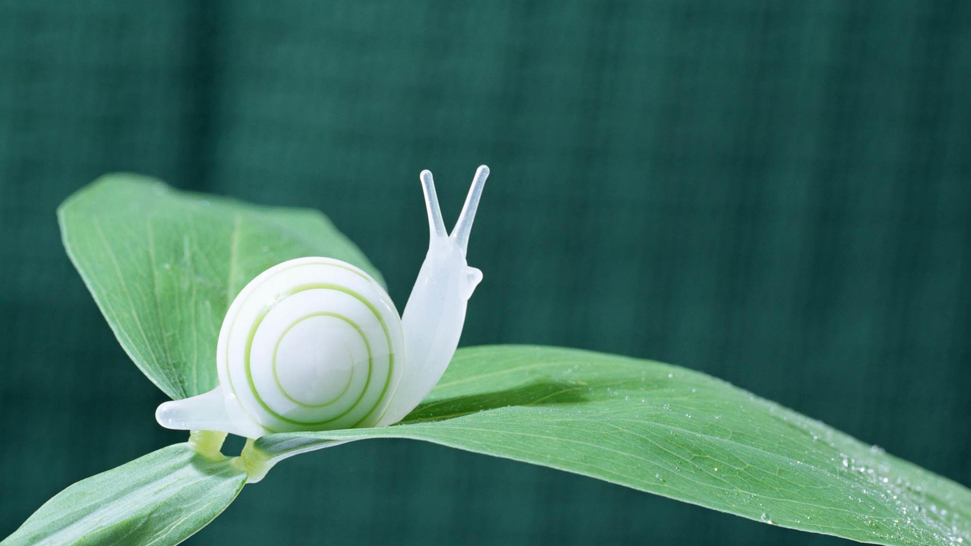 white snail wallpaper 51240