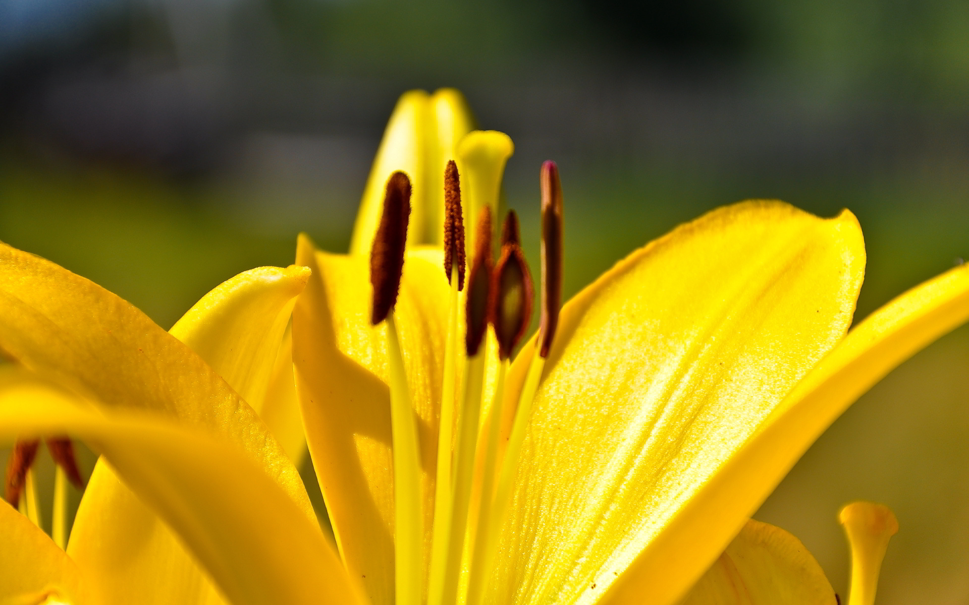 yellow lily flower up close wallpaper 50640