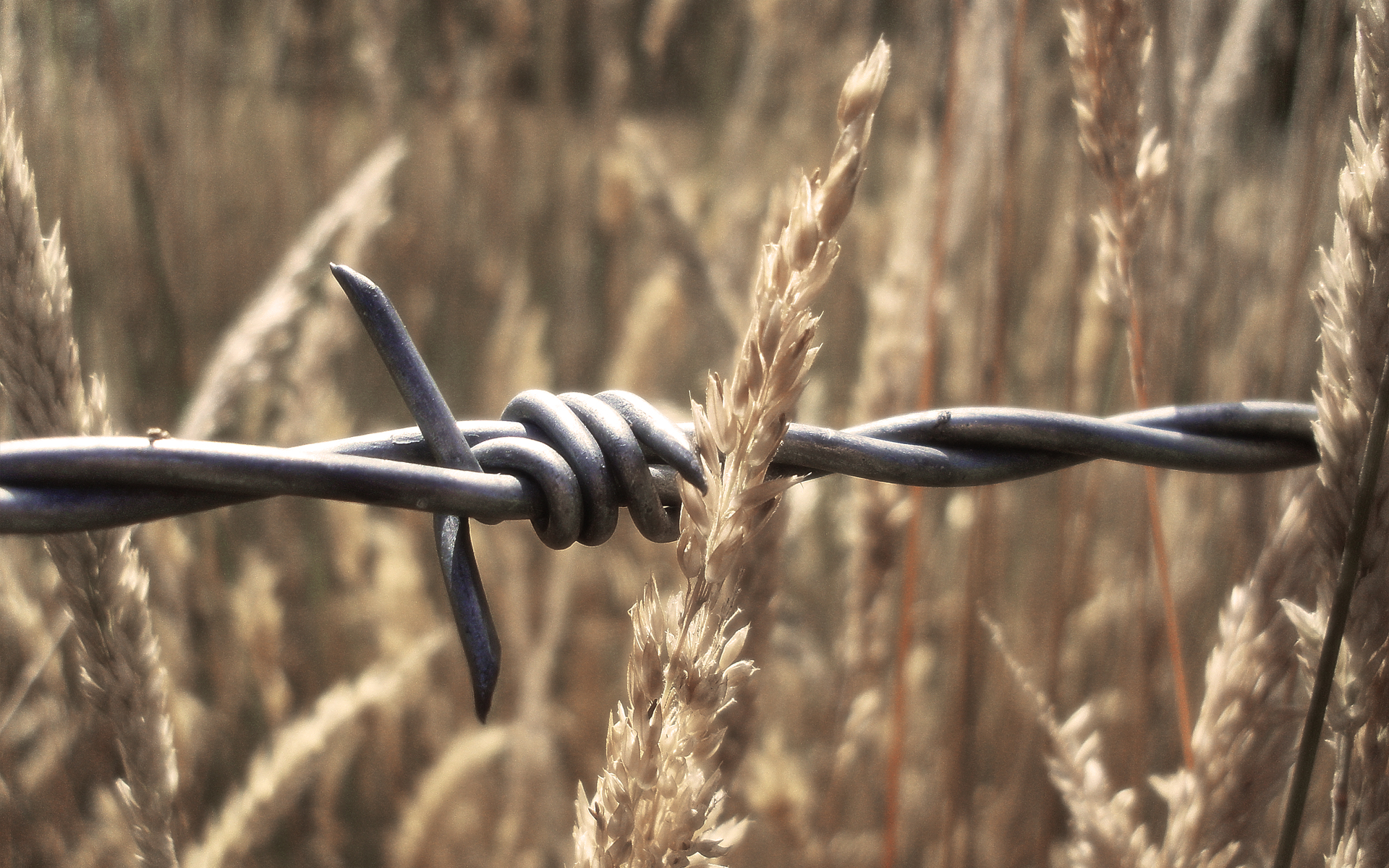 barb wire wallpaper 54319
