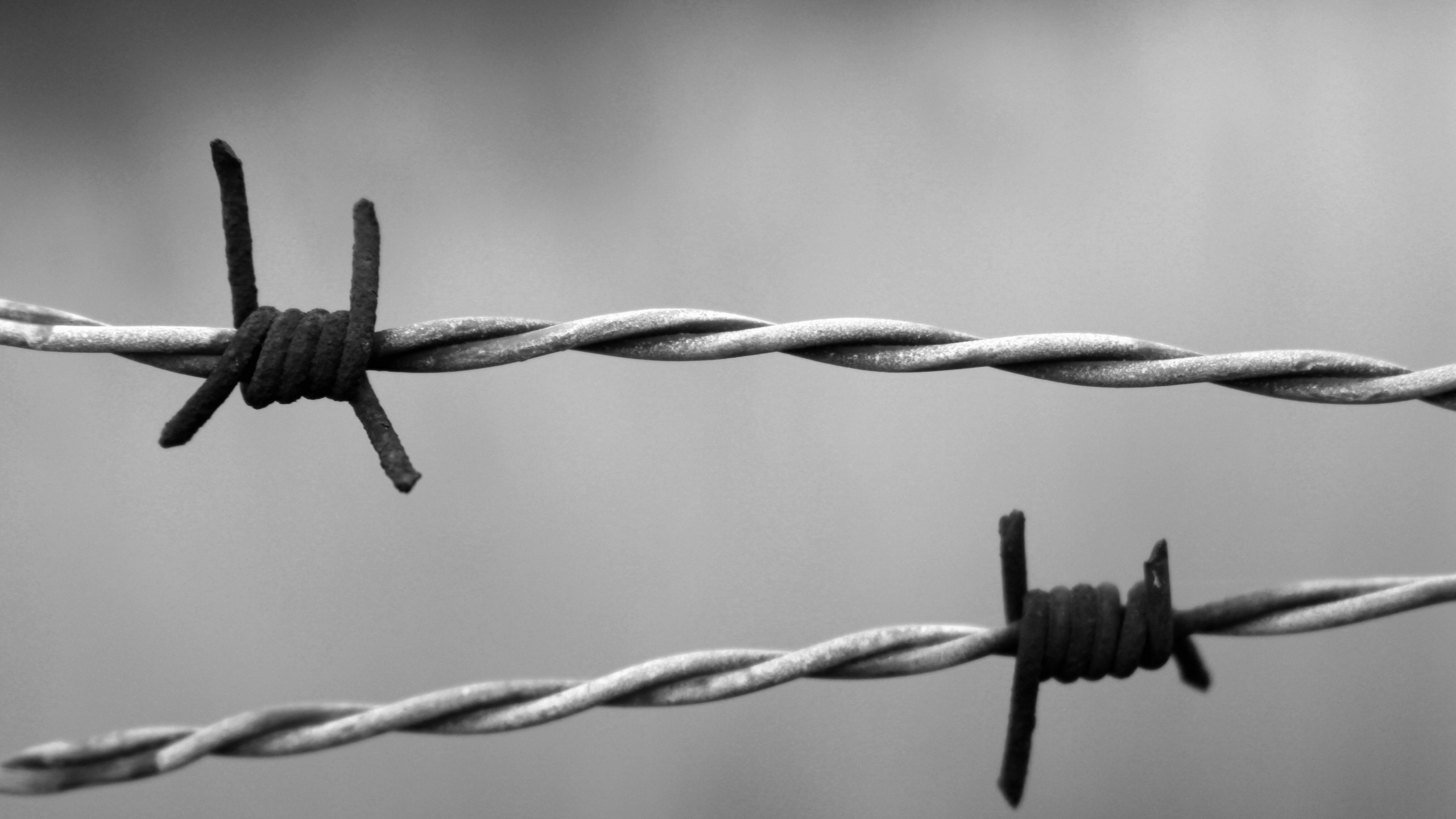 Barb Wire Wallpaper Background 54322 2560x1440px