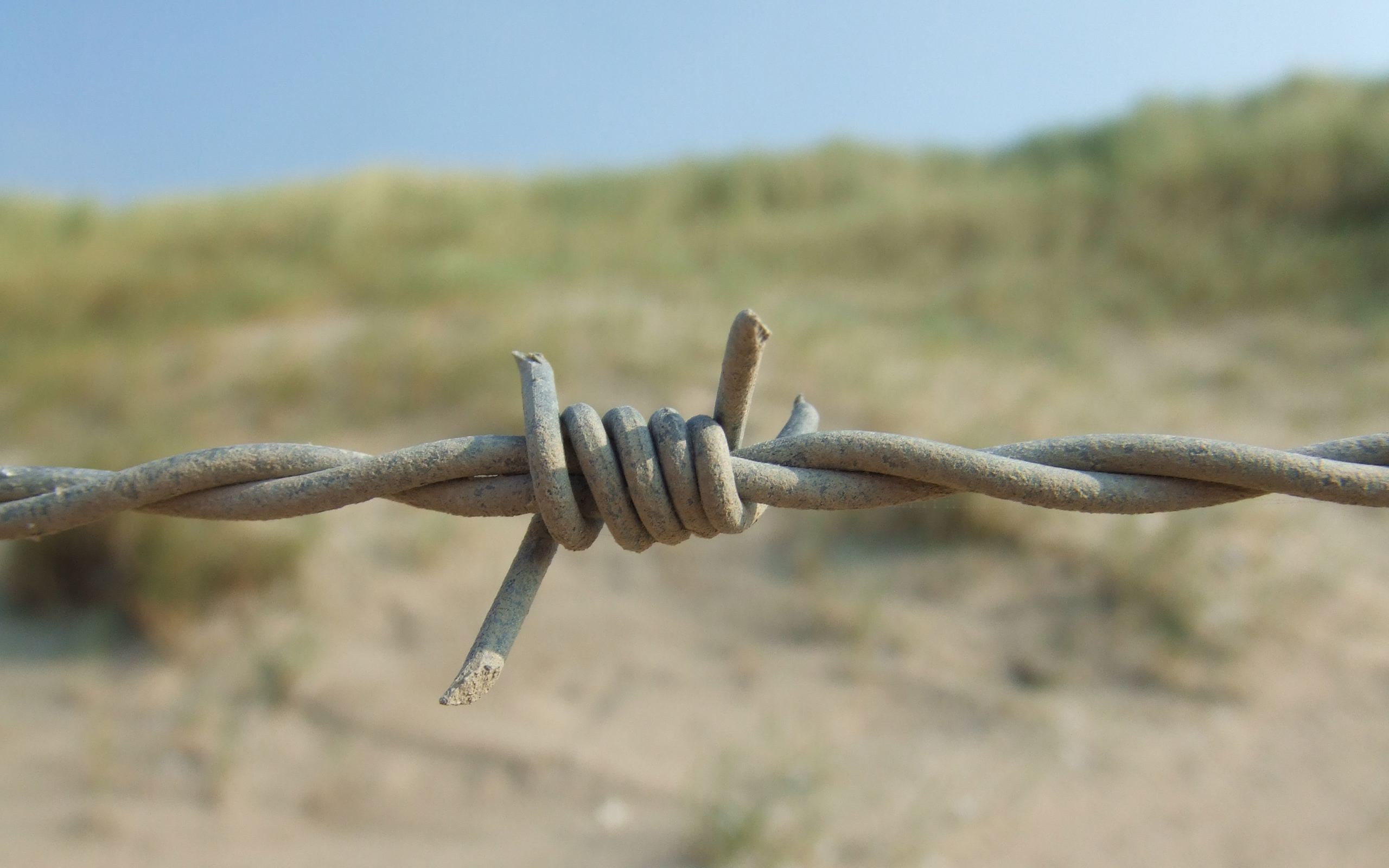 barb wire wide wallpaper 54328