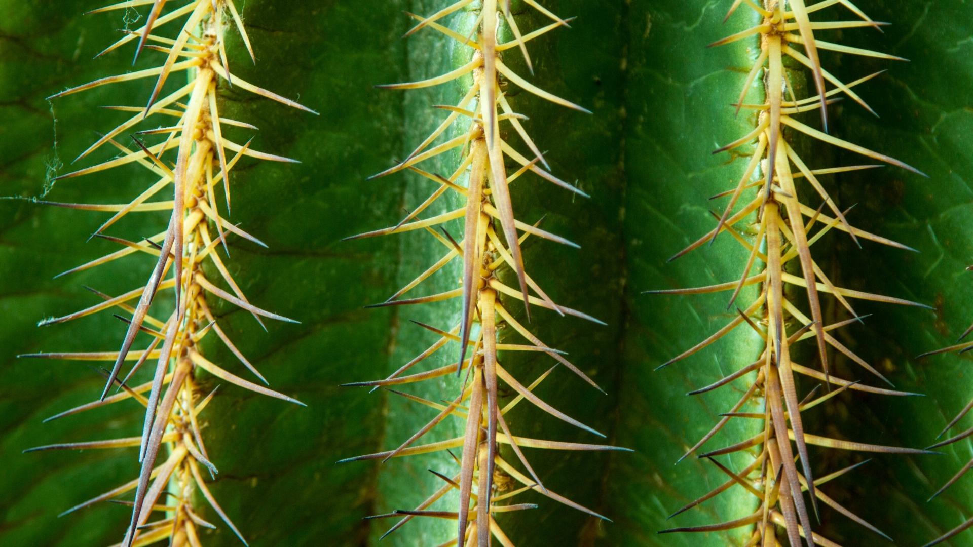 cactus texture desktop wallpaper 51662