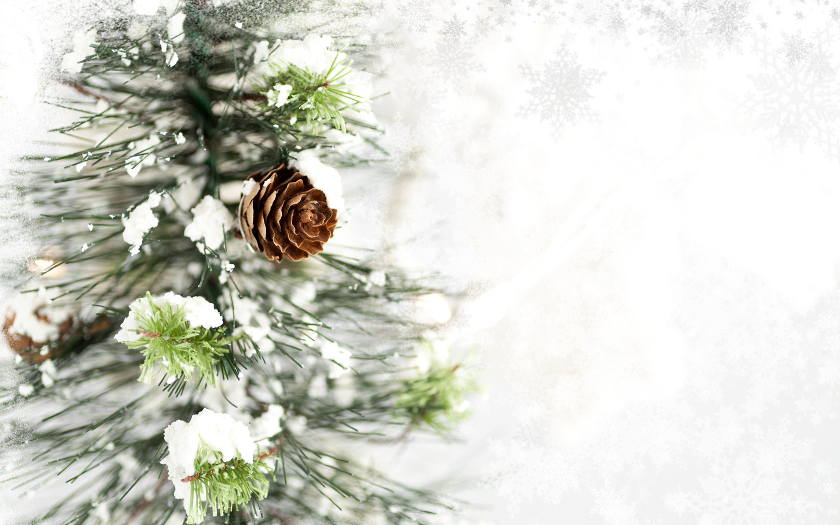 pine cone computer wallpaper 51738