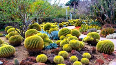 Cactus Widescreen HD Wallpaper 51661