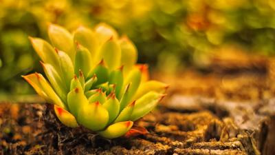 Cactus Widescreen Wallpaper 51664