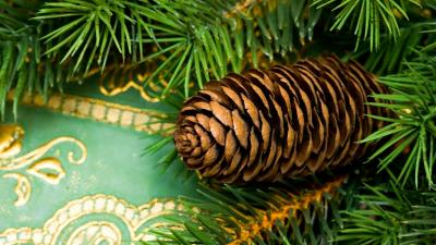 Pine Cone Desktop Wallpaper 51740