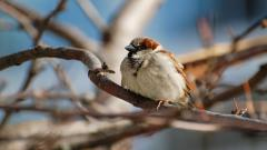 Sparrow Wallpaper Pictures 49385