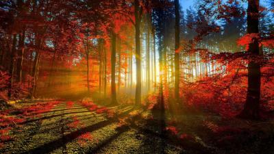 Sunbeam Widescreen Wallpaper 51539
