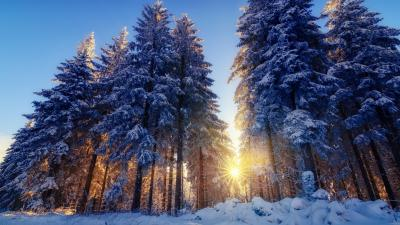 Winter Sunbeam Computer Wallpaper 51537