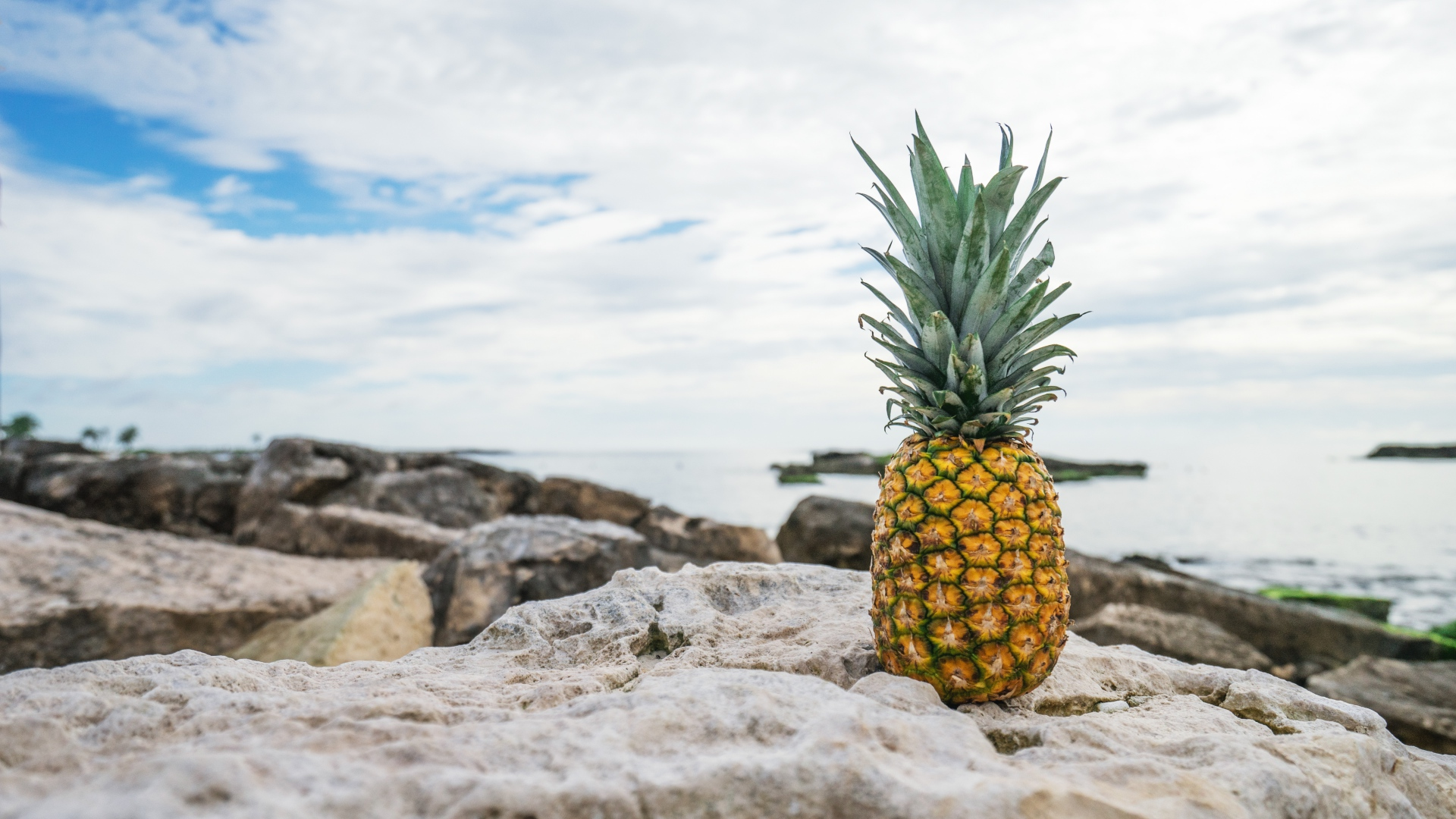 pineapple photography hd wallpaper 61704