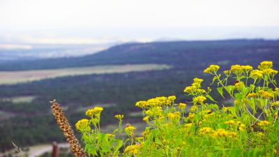 Yellow Flowers Bokeh Flagstaff Arizona Wallpaper 61767